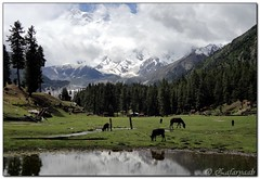 Reflection point, Fairy meadows (zafaryaab) Tags: travel pakistan mountain flower girl beautiful rose photography fort sony lakes palace shangrila area gb northern rakaposhi hunza baba yasin rama nagar diran passu gilgit tattu saifulmaluk baltit altit naltar deosai nangaparbat skardu baltistan sadpara astore fairymeadows kachura sheosar babusar satpara ishkoman lulusar godai ghizar punyal borith khaplu chilim ghanche hoopar atatabad