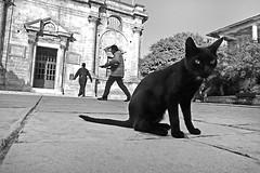 CRETE - Agia Triada Tsangarlon Monastery (luca marella) Tags: bw white black cat greek blackwhite luca chat pb bn holy greece trinity e venetian orthodox gatto bianco nero chania akrotiri marella marellaluca