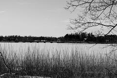 Seurasaari Bridges (Jori Samonen) Tags: bridge winter snow ice plant tree sky cloud meilahti seurasaari helsinki finland nikon d3200 180550 mm f3556 nikond3200 180550mmf3556