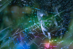 Stranger Things.  230-366. (FadeToBlackLP) Tags: doubleexposure photoshop spiders web bokeh texture portrait colourful strangerthings