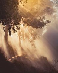 Sunbeams & Dreaming of Autumn (pixelmama) Tags: bigsur juliepfeifferburnsstatepark california sunbeams godrays fog pixelmama explore