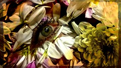The eye of the tiger.... (Think_pineapples) Tags: photography project flowers eye rose sunflower green sparkle petals yellow mixed media smooth eyelashes wanderlust love face model