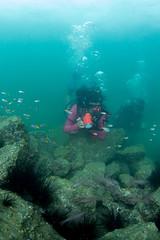 se3500_IMG_1076 (OKANO14) Tags: hong kong scuba diving