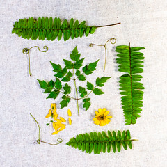 Lakeside Found Items on Burlap (ocanannain) Tags: florida plants stilllife burlap ferns flatlay foraged found fromabove highangleview kimklassen mystillsunday sidelight sidelit square tabletop tabletopphotography topdown mystillsundayclass