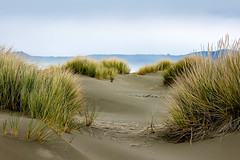 The Dunes (Kyle French) Tags: beach grass northern cali california landscape ocean sand dunes dune