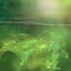 Under the Surface... (Dan O'Mell) Tags: life sea broken nature water girl swimming dark death underwater decay side fear leg redhead crime psycho nightmare decomposition sinking willies lunacy swelling frightening horrific degradation seajellies aivazovsky obsessivefear psycopathic brookeshaden danomell àlabrookeshaden underthesurface201204271407 sadandbeautifulworldgroup