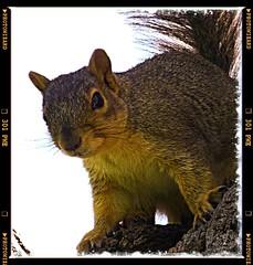 Nuts (Cobra0435) Tags: park usa squirrel colorado riverside critter wildlife parks panasonic riversidepark 2012 zs20 photowizardeditor ©rayhanson dmczs20 ©2012rayhanson
