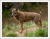 Lobo Ibérico (J.Izaguirre) Tags: wolf olympus lobo zuiko cantabria cabárceno canislupus lobezno otsoa