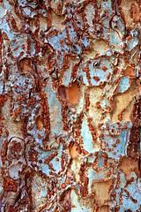 Bark patterns (Deb Jones1) Tags: brown abstract macro texture nature beauty canon garden botanical outdoors patterns bark flickrduel flickrawards debjones1
