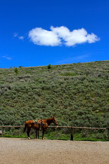 Horse (andrewpug) Tags: ranch horse beautiful nice farm scene wyoming