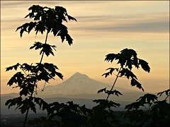 Mt Hood #87 (Oh Kaye) Tags: trees silhouette sunrise pale mthood rockybutte 100possibilities 112in2012