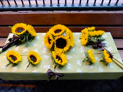 DSCF3591 (Vicky Spence) Tags: wedding brown floral yellow bride wand northumberland sunflower bridesmaid quarter ribbon bouquet bridal buttonhole