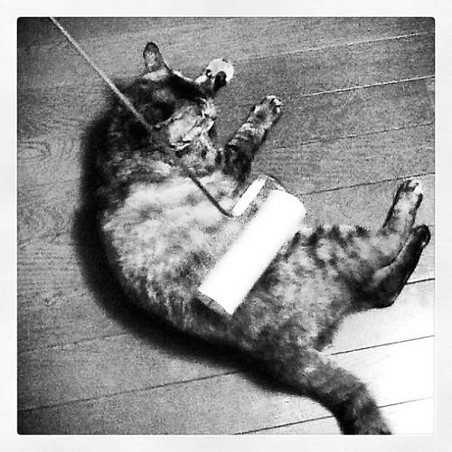 コロコロでリラックスする猫