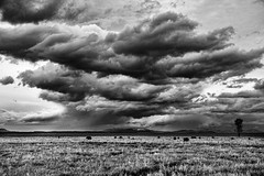 Storm Clouds Over Jackson Hole (Jeff Clow) Tags: storm nature weather landscape bison grandtetonnationalpark antelopeflats jacksonholewyoming