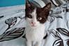 Quiet kitty (afadingsummer) Tags: blackandwhite pet animal cat nose nikon kitten feline chat quiet adorable kitty peaceful moustache whiskers precious whisker meow katze cuteness chaton blackandwhitecat miaou d5000