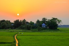 Beautiful Bangladesh.... (Z A Y A N) Tags: sunset reflection green home rural landscape gold golden asia village harvest sunsetglow ricefield rgb canondslr bangladesh 2012 villagehouse southasia ruralhouse cropfield goldenglow zayan manikganj farmershouse 550d beautyofbangladesh beautifulbangladesh canoneos550d canoneosrebelt2i rebelt2i kissx4 canoneoskissx4 zayan1904 gettyimagesbangladeshq12012