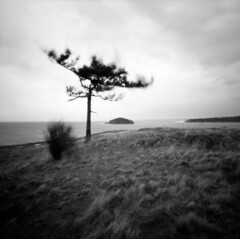 Soloist (J.Sod) Tags: statepark longexposure tree 120 film water mediumformat washington fuji image windy overcast pinhole whidbeyisland fujifilm pugetsound 100 washingtonstate deceptionpass zero zero2000 pinholephotography zeroimage acros asa100 fujiacros treetuesday washingtonstatepark
