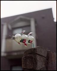 don't ask don't tell (beetabonk) Tags: 120 6x6 japan mediumformat square kamakura 日本 神奈川県 hasselblad500cm 鎌倉市 fujipro160s kanagawaprefecture 関東地方 kantōregion carlzeisstplanar2880cf jptkp6790160s0612027
