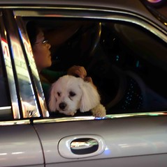 Doggie in the Window (daisy70) Tags: woman dog white window car night jul doggie foresthills 2012 doggieinthewindow daisy70
