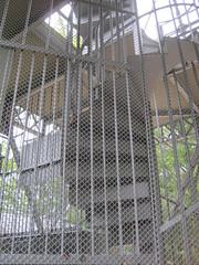 Treppe Aussichtsturm (DanTheCam) Tags: treppe liestal aussichtsturm schleifenberg