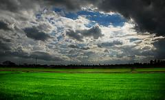 ท้องฟ้าและทุ่งนา---ข้างหลังบ้านของฉัน