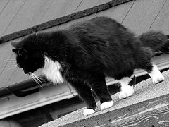 Black and White Cat. Panasonic G2 + Tokina SZ-X 60-300mm f4-5.6 (Sang3eta) Tags: white black cat lumix panasonic tokina 300mm g2 600mm 60300mm szx dmcg2