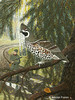 Рябчик (Холст, акрил, 80х60,2006) (Nikolai Fomin) Tags: wild bird art nature painting russia hunting grouse hiding spruce masking hazelgrouse