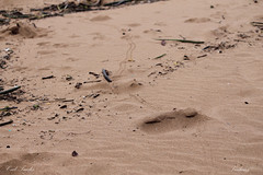 Crab Tracks (Tradams Photography) Tags: beach darwin mindilbeach mindil travisadams tradamsphotomerchantnet tradams tradamsphotography