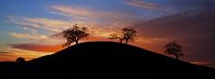 Four Oak Knoll (ernogy) Tags: california sunset sky color tree silhouette landscape photography oak outdoor hill knoll oaktree ernogy