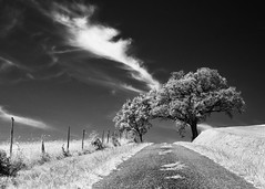 hill top (Thomas Leth-Olsen) Tags: road tree clouds vanishingpoint agriculture campagne