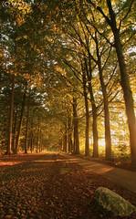 The old stone path (martijntuit) Tags: sunset holland tree canon golden zonsondergang bomen colours hour lucht beech laan luchten beuken 1000d