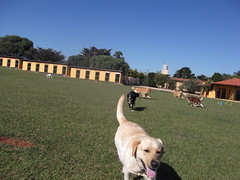 DSCF8894 (Clube de Compo Hotel Fazenda para Ces) Tags: dogs ces daycare itu recreao clubedecompohotelfazendaparaces