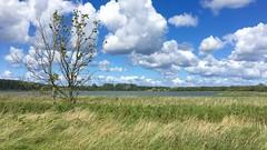 am Spyker See (hellrac3r) Tags: rgen ostsee germany balticsea landschaft feld himmel gras see baum outdoor pflanze wolken