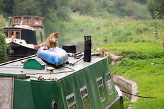 Cat sitting on canoe on roof of canal boat (Ian Redding) Tags: animal bath british england kennetandavon nature somerset uk boat boater canalboat canoe cat chimney countryside domestic ears ginger green houseboat kayak orange outdoors outside pet pricked profile river rural sitting smoke water white