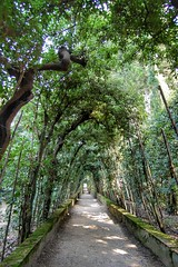 Giardini di Boboli   Boboli gardens (annaandolfatto) Tags: firenze florence italia italy giardino garden nature boboli toscana tuscany