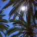 Palm leaves in the sun, Palma de Mallorca, Spain