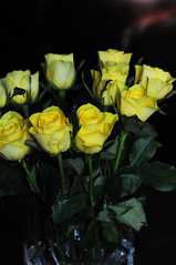 DSC_5593 (PeaTJay) Tags: nikond300s sigma reading lowerearley berkshire macro micro closeups gardens outdoors nature flora fauna plants flowers rose roses rosebuds