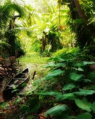 Kerala backwaters (ossington) Tags: southindia india flora backwaters kerala cochin