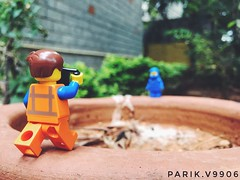 Here, Lemme snap a pic of you! (parik.v9906) Tags: greenery outdoors nature plants backyard parikv9906 project days 365project 365days 365 iphoneography legography iphone6s iphone minifigures minifigure legos lego