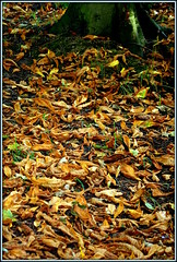Already? (* RICHARD M (Over 5 million views)) Tags: autumnleaves leaves autumnal heskethpark southport sefton merseyside august summer summertime nature fall