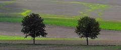 Paysage du Vexin franais (Phil.Claboter) Tags: nuageux nuage ombre shadow couch lev soleil sunset sunrise noir vert green paysage landscape reflex nikon d5000 dxo optic hdr natural fx effect picture composition photographique photographic compositions flickr color black white blanc et couleur lightroom photoshop view nx viewnx canon d5100 d5200 d5300 d7000 d7100 capteur format dx full frame expeed cmos mgapixels objectifs afs nikkor jpeg nef raw sensor camera correction fmount dlighting lenses hd claboter philippe phil