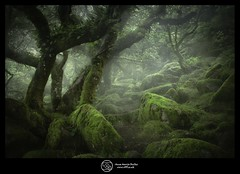 Wistman Wood England ... Green Dark Forest (annabulka) Tags: annabulka art annamarijabulka anawesomeshot amazing beautiful best beautifull colour capture contrast colorphotoaward color colorfullaward colourartaward dark darkstyler darck digital green greatbritain expresion england flickr fantastic hot inspiration lonelyplanet love mywinners nature natural nationalgeografic night photography photo studio999 shot show travel tourist turist travels tourism tree trip uk world wildlife wild forest wood studios999