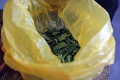 ~recolectas de cosechas~ hojas de cannabis   <3 plantas medicinales (juanitamitimota) Tags: cannabis recoleccin cosecha marihuana weed