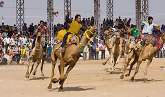 Pushkar-Mela (Bhati Tours) Tags: ajmer pushkar day tour jaipur local sightseeing packages tours
