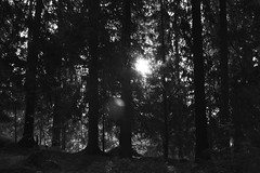 Napfelkelte a Csorbatnl (zsolesz_93) Tags: slovakia sun forest blackandwhite nikkor1855mm nikond3200
