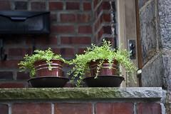 New York City (Bravo213) Tags: door nyc newyorkcity flower window wire candid steps pots barbed cy bigmomma challengeyouwinner pregamesweepwinner