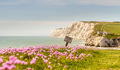 Take Care - Shallow DoF can be dangerous. (s0ulsurfing) Tags: uk pink flowers light england sun sunlight seascape english beach sunshine sign danger canon downs island 50mm bay coast chalk dof bright may coastal thrift isleofwight coastline wildflowers isle wight 2012 freshwater freshwaterbay s0ulsurfing jasonswain