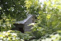 Location (Ingerid Jordal) Tags: spring tre vår hytte trær grønt treehut lauv trehytte
