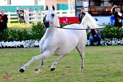 Adr005 (Adr7manCam) Tags: horses horse nikon hq adr d300 2011       abdulrahman  k5a  alhaqbani  adr7man adr7mancam  0500004936 adrhman