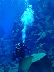Diving Silfra 5